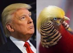 trump-hair-bird